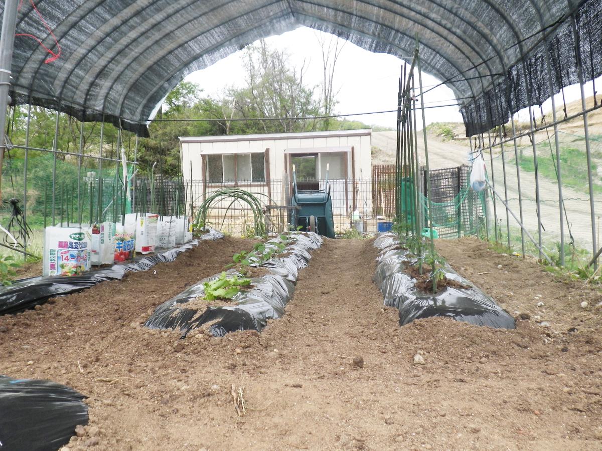 山砂・客土を活用した農作物の状況
